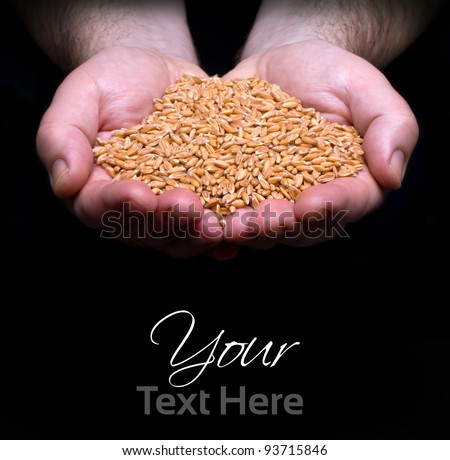 grain in hand on the dark background