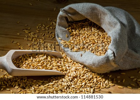 grains of oats. yields for corn in agriculture