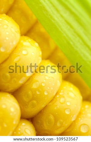 Grains of Ripe Corn with Water Droplets  and  Green Leaf/ Extreme Macro / Yellow background