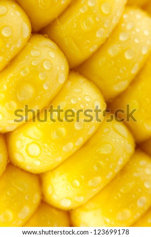 Grains of Ripe Corn with Water Droplets / diagonal / Extreme Macro / Yellow background