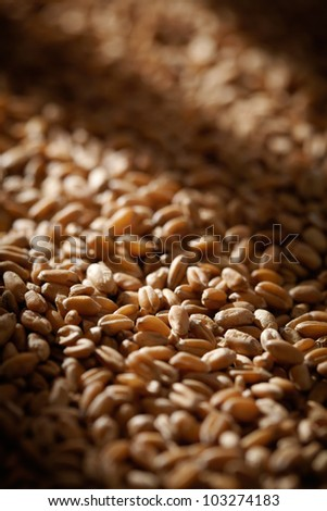 Grains of wheat close-up with sun light effect