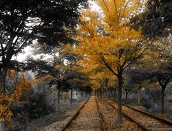 Grainy autumn railroad photo highlighting the orange color