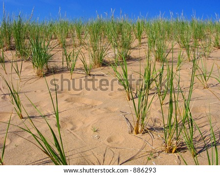Grama da duna no nacional dormindo das dunas do ursolakeshore - stock photo