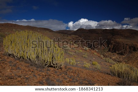 Gran Canaria, landscapes along the hiking route around the ravive Barranco del Toro at the southern part of the  island, full of caves and grottoes, close to San Agustin resort, water is running in th Photo stock ©