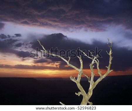 stock-photo-grand-canyon-snag-at-sunset-arizona-52596823.jpg