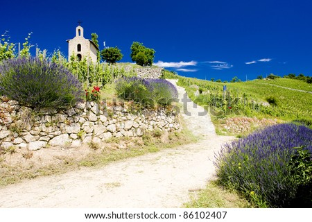 grand cru vineyard and Chapel of St. Christopher, L'Hermitage, Rhone-Alpes, France