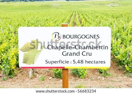 grand cru vineyard of Chapelle-Chambertin, Cote de Nuits, Burgundy, France