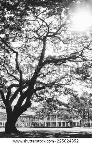 Grand old tree in the sun shine