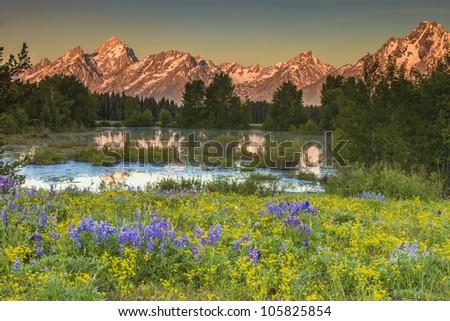 Grand Teton Peaks with field of flowers