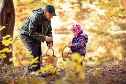 Grandfather and granddaughter gather mushrooms in the autumn forest.