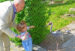 Grandfather shows the little granddaughter of the Daurian crane in the zoo