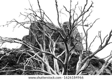 Granite tor through branches of dead tree, burnt in bushfire Stock fotó ©