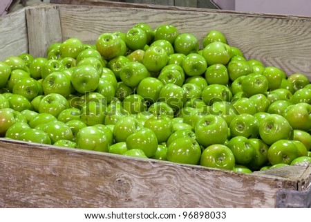 Granny Smith Apples in a cull bin in a fruit packing warehouse