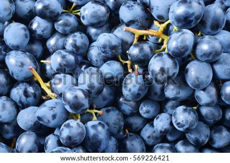 Grape background. Dark grape. Blue grape. Wine grape. #569226421