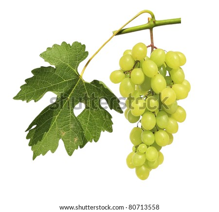 Grape cluster isolated on a white background