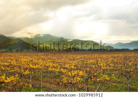 Grape crops at Elqui Valley, Coquimbo Region, Chile #1029985912