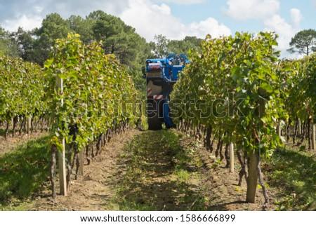 Grape harvester harvesting vines in French vineyard