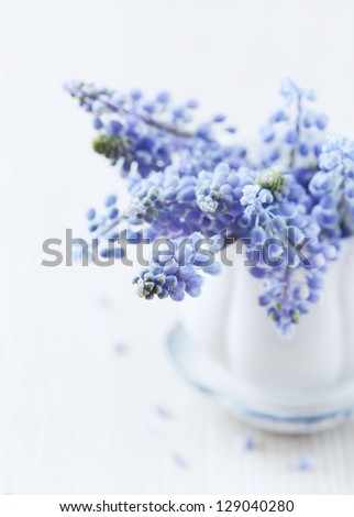 Grape hyacinths in a vintage cup