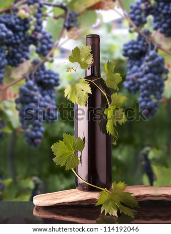 Grape leaves around a bottle of wine