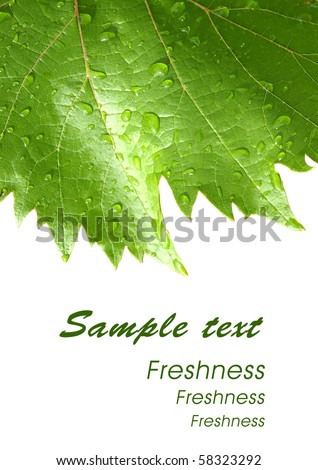 Grape leaves with drops of rain. Template design card.