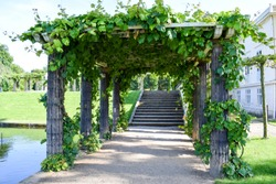grape leaves wrapped over ancient style garden pergola columns