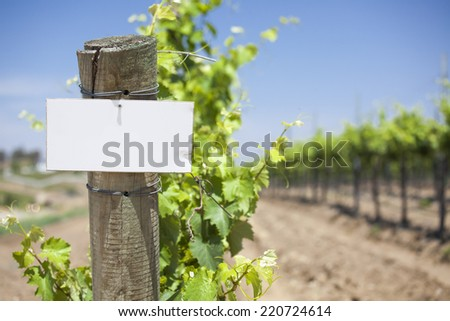 Grape Wine Vineyard with Wooden Post Holding Blank Sign Ready for Your Own Text.