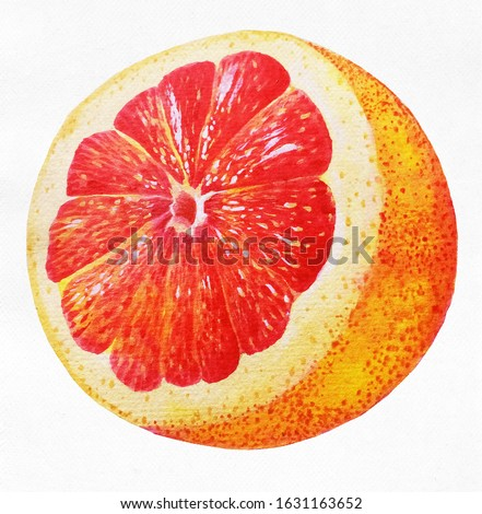 Grapefruit sliced in half showing juicy pulp and reddish flower core, can also pass as orange or lemonade illustration painted in watercolor and gouache