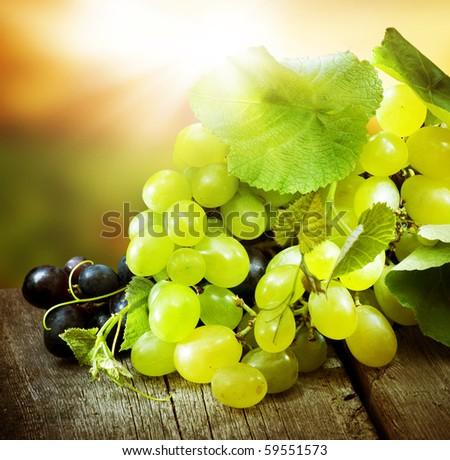 Grapes.Grapevine over vineyard background