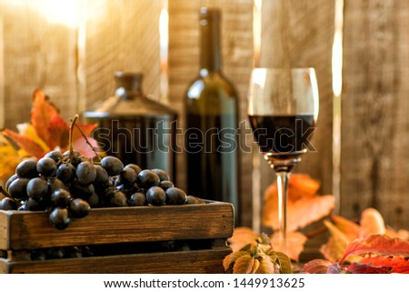 Grapes harvest. Vintage wooden box with freshly harvested black grapes at sunset in autumn harvest. Ripe grapes in fall. Wine and ripe grape served for a friendly party in a winery.