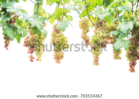 Grapes isolated on white background #703554367