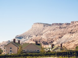 Grapes ready to be harvested at a vineyard in Palisade, Colorado.