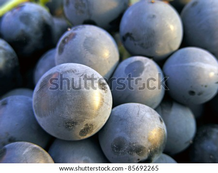 Grapes. Selective focus.