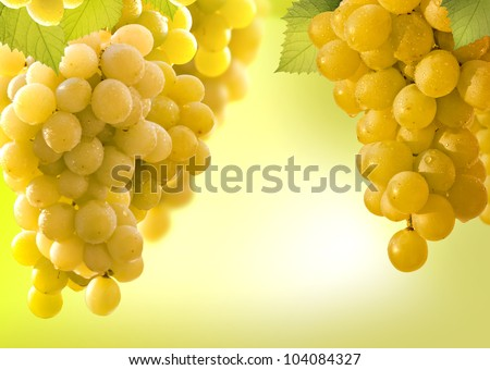 grapes vine border abstract background over white