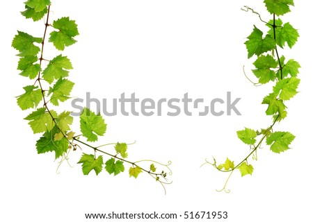 Grapevine arch border on white background