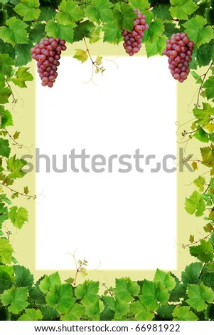 Grapevine frame with pink grapes - stock photo