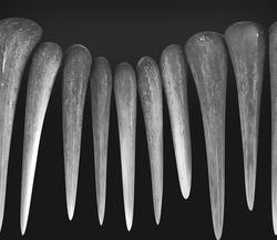graphi design like elephant teeth or ivory shaped and white   background