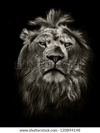 Shutterstock graphic black and white lion portrait on black