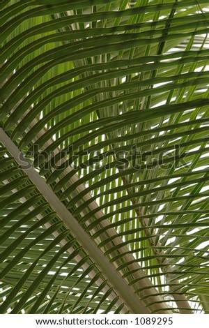 Graphic Palms
