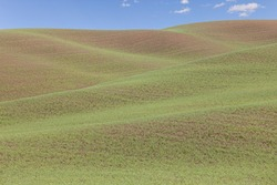 Graphic patterns formed by wheat fields blue sky and puffy clouds in Palouse, Washington State, North America