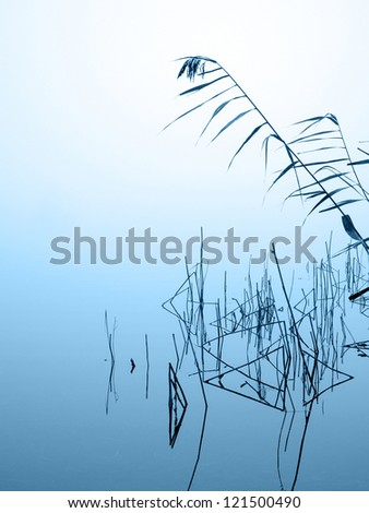 graphical reed reflecting in the water on a misty winter day