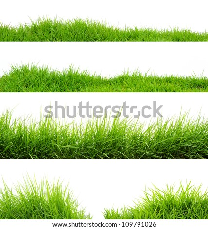 Grass - stock photo