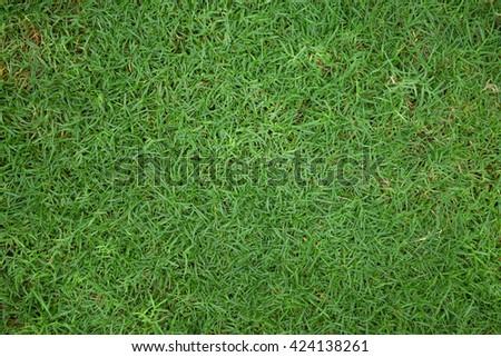 grass - Shutterstock ID 424138261
