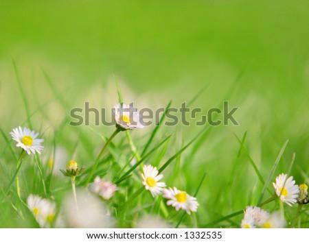Grass and daises, focus on the highest daisy