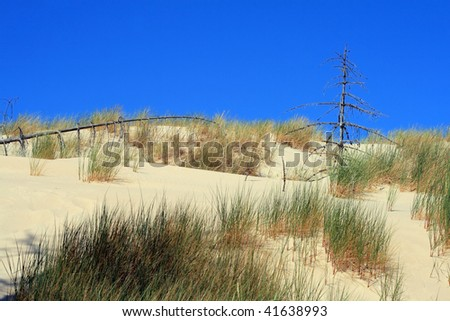 Grass and dead trees in sand dunes at Leba - Poland
