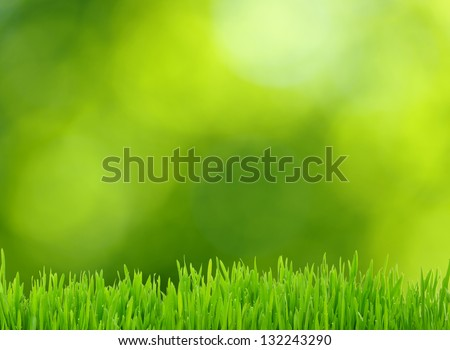 grass and defocused green background