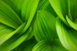 grass and dew abstract background