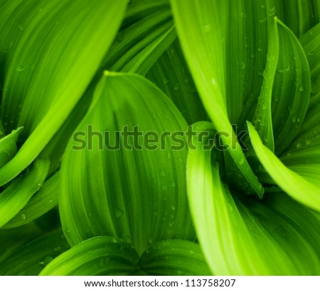 grass and dew abstract background #113758207