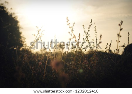 Grass and Flower in a sunset #1232012410