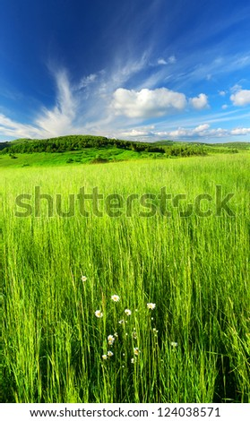 Grass and flower on meadow.  Summer landscape