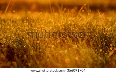 Grass and flowers in the meadow #356091704